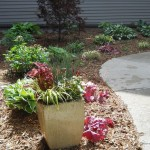 Front walkway flowers and plants