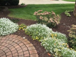 Landscape Myths That Hurt Your Landscape Design