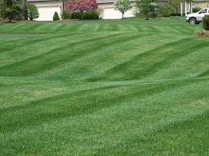 Lawn Cutting Service - Ann Arbor MI
