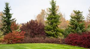 Natural-form-shrubs_large