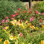 Flower Bed with Perennials
