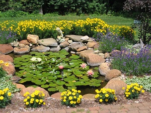 Pond with flowers and statue