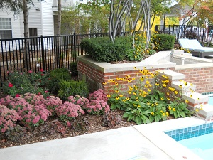 Plants flowers gallery for Plants for pool area