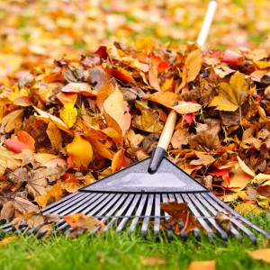 fall yard clean up services