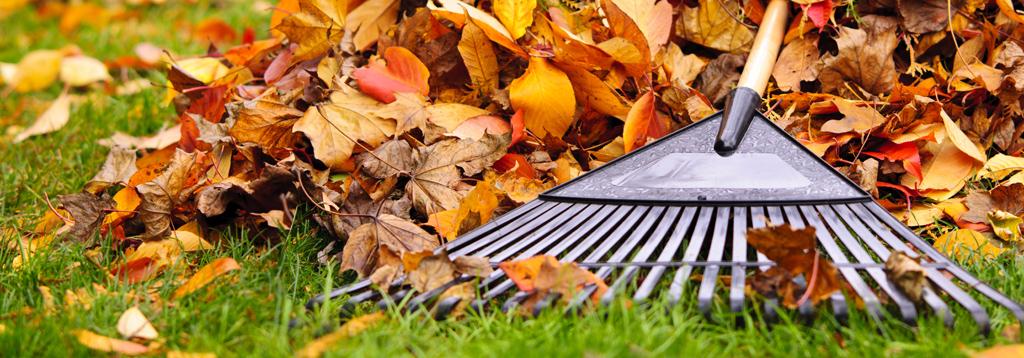 leaf-removal-maintenance-program