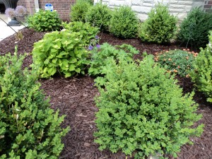 Mulch with New Plantings