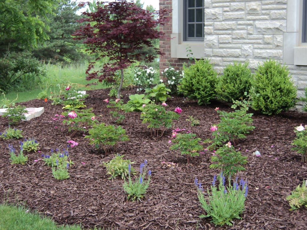 Which Type Of Mulch Is Best For Your Yard