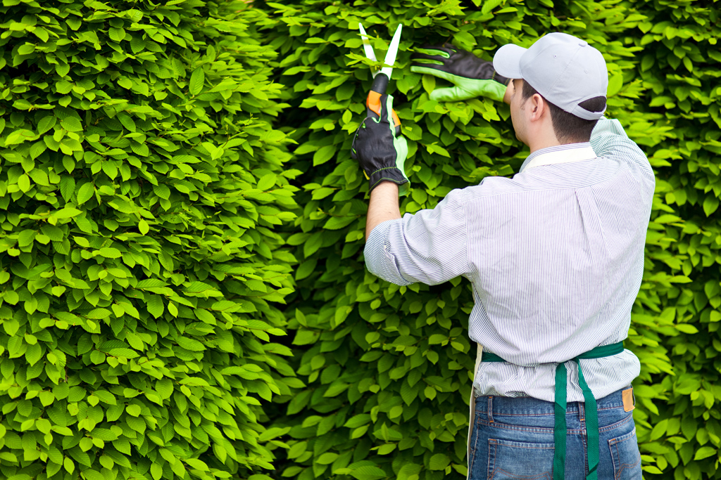 professional-pruning