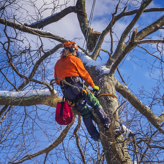 tree-service-maintenance
