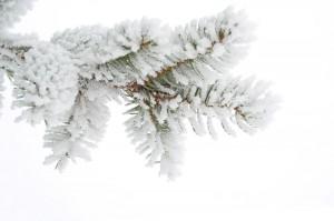 winterbranch
