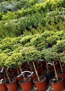 bigstock-Garden-plants-nursery-7773100