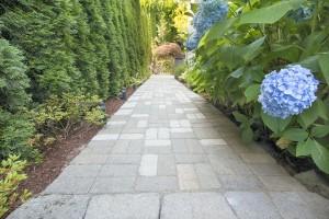 bigstock-Hydrangea-Flowers-Along-Paver--35678549