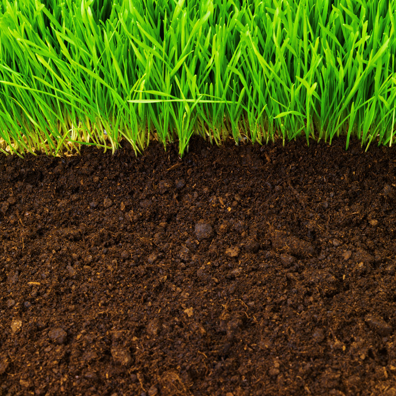 The Causes and Dangers of Barren Soil