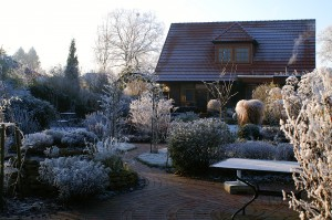 frozen yard with plants and ice