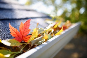 bigstock-Rain-gutter-full-of-autumn-lea-37528768