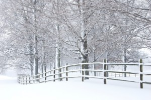 Snow covered fence and trees