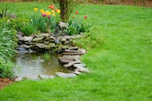 Garden Pond With Raindrops
