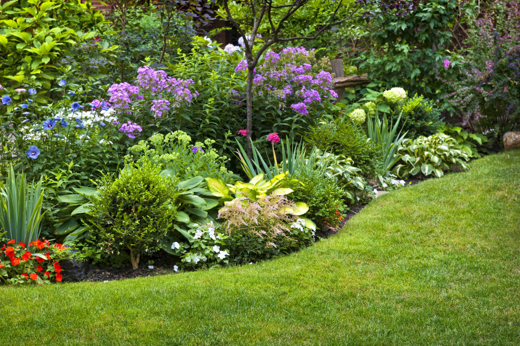 Creating a rain garden in your yard for Landscaping plants