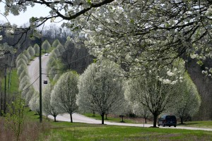 Pollen Drive