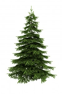 Spruce Tree Isolated On White Background