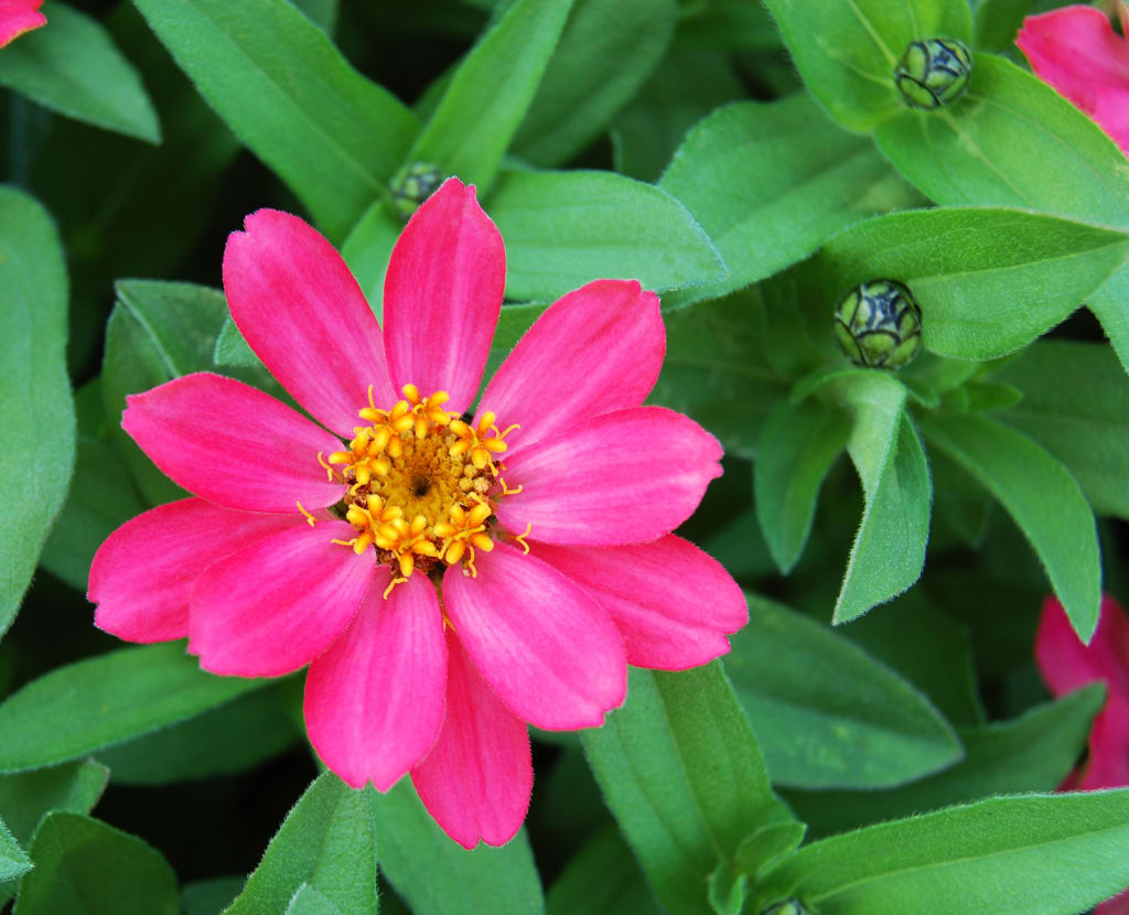 which types of flowers thrive in summer