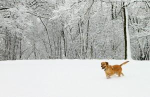 Sam In A Field Of Fresh Snow