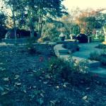 Backyard Plantings
