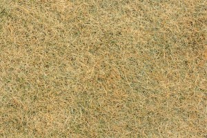 How to Identify Dead grass Dormant Grass