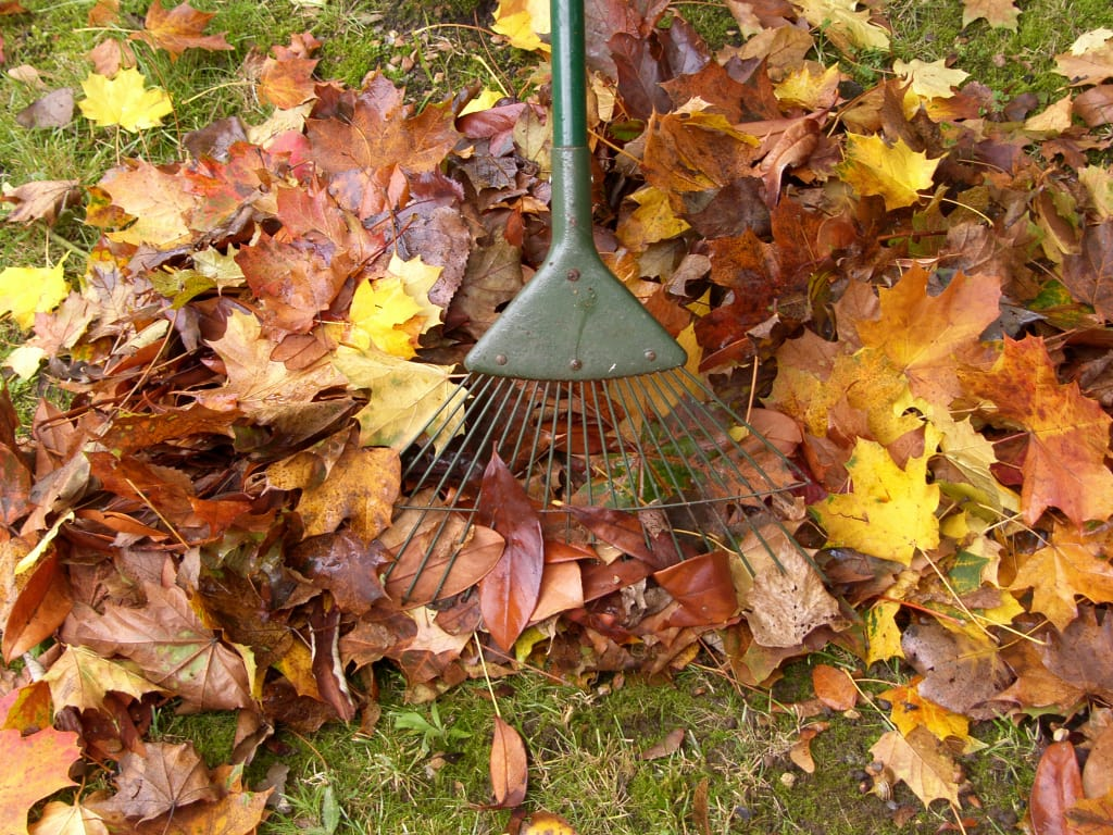 Can Fallen Leaves Suffocate Your Plants This Fall?
