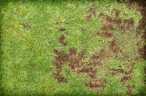 Green And Dry Grass,patterned Field Of Green Grass Sports Field