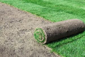 Installing new lawn