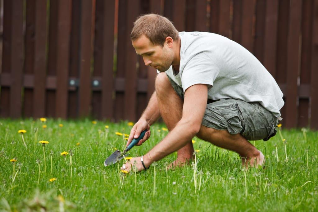 С садовником на лужайке 12 фотография