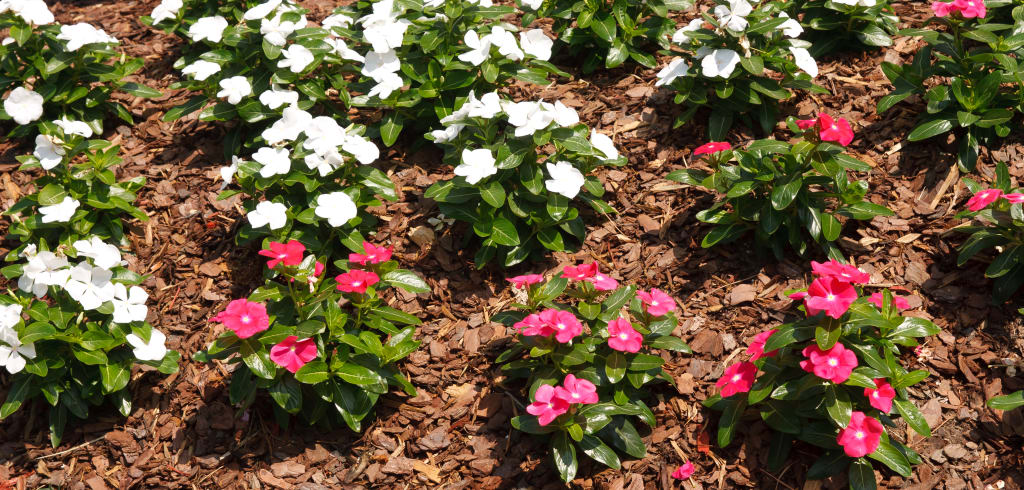 Benefit Of Using Mulch Around Your Plants