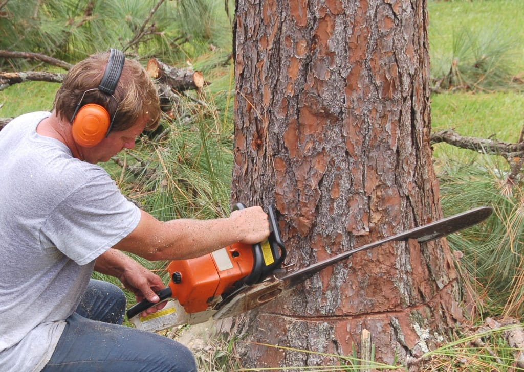 Warning Signs That You May Need a Tree Removal Service