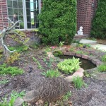 Before - Overgrown Front Bed
