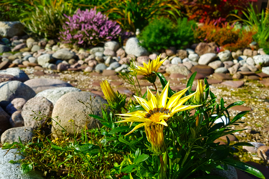 Landscaping with plants and flowers on the edge of a dry creek bed in a yard.