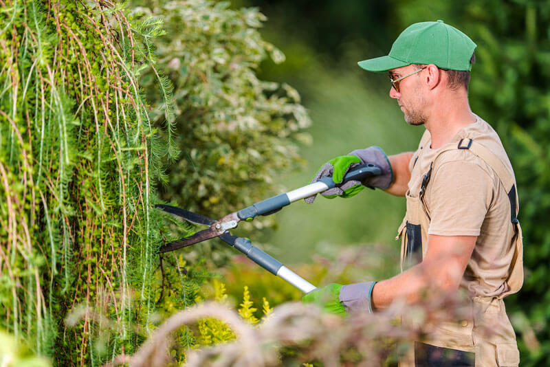Man pruning shrubs-hoa-landscapers