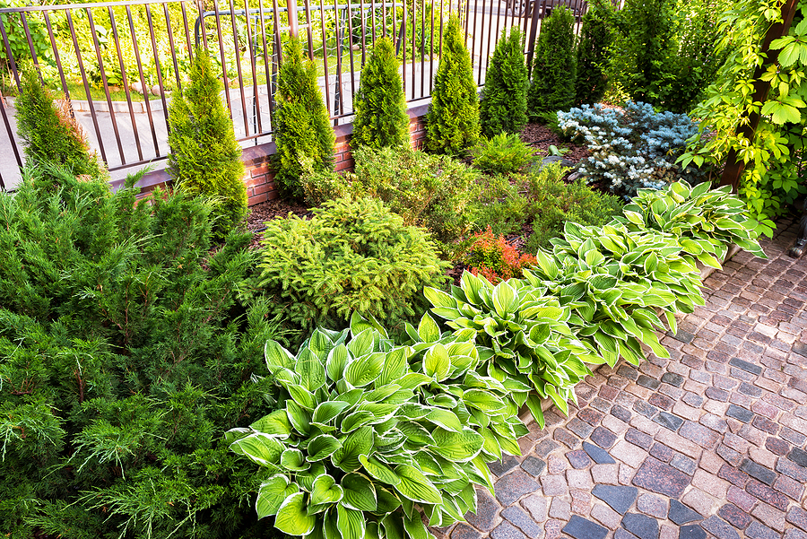 Lush landscape intalled by professional landscape company.
