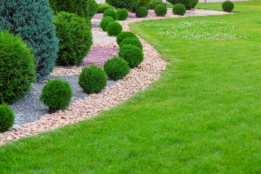 Landscape bed of garden with wave ornamental growth cypress bushes gravel mulch by color rock way on a sunny day.