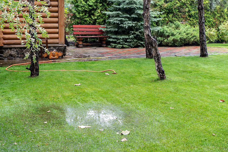 Nice green lawn with trees and drainage problem.