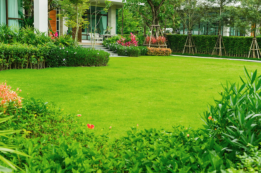 Residential lawn with lush green grass lined with shrubs and flowers.