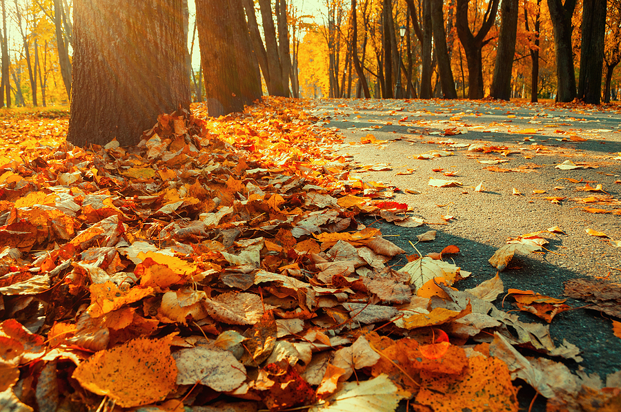 Fall landscape view of peaceful street.